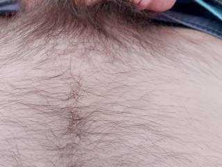 Taking pictures of my cock while camping