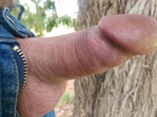 Out in nature so I thought why not be out, would loved to have been caught. Would you like to catch sight of my cock in the outdoors?