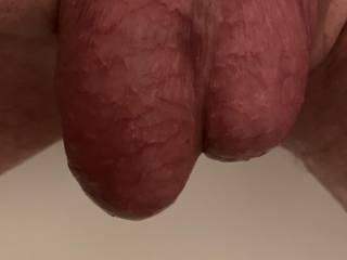 Balls shaved and ready for some play and suck