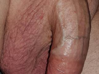 hanging trimmed thick veiny white cock dick penis balls