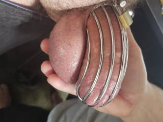 Wife teasing me a bit making me fill the whole cage :)