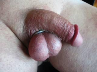 got my swollen balls through a ring.......  i love jacking off when my balls bounce around. makes me cum harder.
