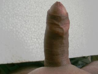 Thick cock erected. Who want to ride my cock?